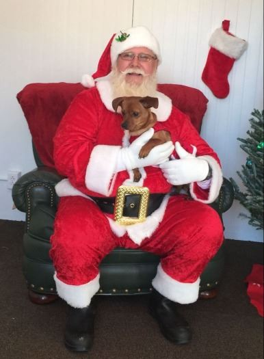 Santa holding small brown dog in his lap